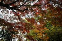 秋色 - akiy's  photo