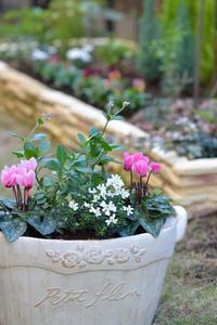 庭の寄せ植え - フォト de パラダイス