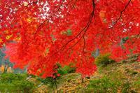 村松公園(2) - くろちゃんの写真