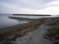稚内OM海岸アタック - 化石最北ブログダダーン