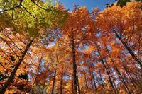 神戸森林植物園 ② - グル的日乗