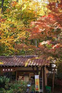 神戸森林植物園 ③ - グル的日乗