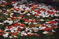 神戸森林植物園 ⑤ 水辺の光景 - グル的日乗