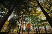 木立の中で - akiy's  photo