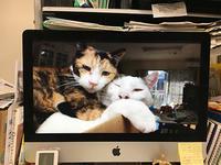 朝、MACを立ち上げたら - ぶつぶつ独り言2(うちの猫ら2016)