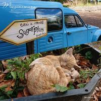 山梨県へ「車と猫」萌木の村 2016.11.11 - わたしの写真箱 ..:*:・'°☆