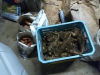収穫 - 地産地消で沸かし湯の宿