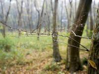 11月の冷たい雨が降った日 - オヤヂのご近所仲間日記