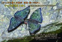 八重山諸島のオジロシジミ他&関東のヤマトシジミ in2016.10 - ヒメオオの寄り道
