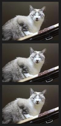 わたしもあるある - ぎんネコ☆はうす