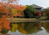 やまとの庭へようこそ(Welcome to the gardens in Nara and Kyoto) - ももさへづり*やまと編*cent chants d'une chouette (Nara)