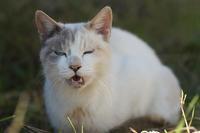 のら - ネコと裏山日記