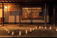 都ライト'16 - 花景色-K.W.C. PhotoBlog