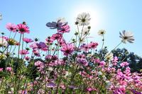 秋の花々咲く植物園(京都府立植物園) - 花景色-K.W.C. PhotoBlog