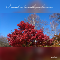 山梨県へ「青空と紅葉と白樺」 八ヶ岳リゾートアウトレット 2016.11.12 - わたしの写真箱 ..:*:・'°☆