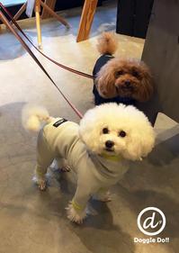 Hello ジョン太&ヴィッキー !! - Doggie Do!! / good dog and hello cat !!