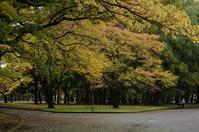 公園の秋 - akiy's  photo