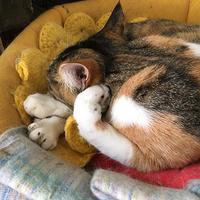 変な寝方 - ぶつぶつ独り言2(うちの猫ら2016)