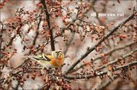お部屋から野鳥観察 - ハーブガーデン便り