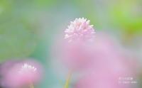 短い秋 - 花々の記憶  happy momo