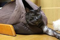 お願い! - ぎんネコ☆はうす