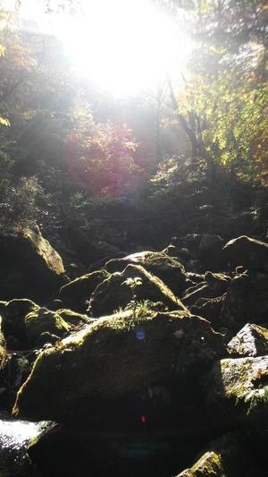 奥多摩の紅葉 - That's 昭立造園