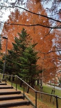 11月 仙台の美風景 - pirokon散歩