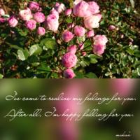 山梨県へ「お花」ハイジの村 2016.11.12 - わたしの写真箱 ..:*:・'°☆