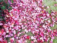 素敵な秋~み~つけた♪ - galette des Rois ~ガレット・デ・ロワ~