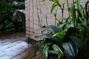 早々と雪降りの朝冬構へ - 四季折々の写真・俳句集