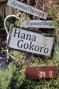 hanagokoroさんでお買い物 - ゆきなそう  猫とガーデニングの日記