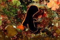 16.11.24 元気ですよ(笑) - 沖縄本島 島んちゅガイドの『ダイビング日誌』