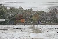 降雪が54年ぶりで紅葉に雪!!!! - 自然のキャンバス