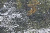 季節はずれの雪 - 風と花を紡いで