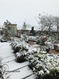 ゆき - さにべるスタッフblog     -Sunny Day's Garden-
