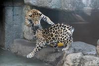 小助佐助 - 動物園へ行こう