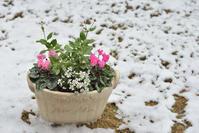 11月の初雪 - フォト de パラダイス