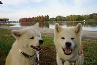 水元公園を散歩する - 秋田犬「大和と飛鳥丸」の日々Ⅱ