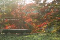 紅葉Days③**募る想いを秘めて - きまぐれ*風音・・kanon・・