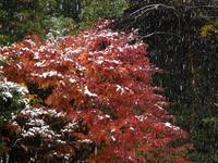 11月の積雪 - tokoya3@