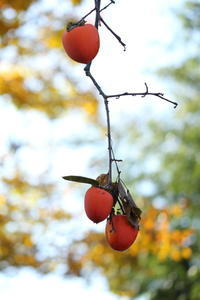 晩秋の忘れ物 - PhotoWalker*