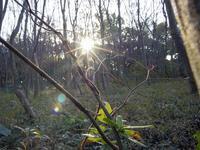 越冬トンボ ホソミオツネントンボとオツネントンボ - オヤヂのご近所仲間日記