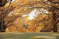 新宿御苑の紅葉と黄葉は!!!!!! - 自然のキャンバス