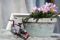 せっかく。 - おもいでは自転車とともに