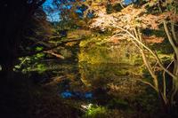 紅葉と大名庭園のライトアップ - Azzurro Nuvola