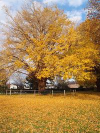 青葉の森公園に紅葉を期待しても、、、 (11/26) - わが愛しのXXX。