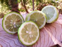 レモン 花柚 収穫した果実を使って - 菜園部末席