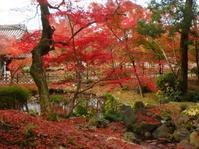 紅葉の京都で若冲リベンジ - うららフェルトライフ