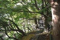 161126鎌倉ハイキング(4) - 午後の陽射し