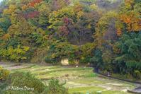 20161106 里山の散歩道:クズの葉でコミスジの越冬幼虫をみつけた - NATURE DIARY